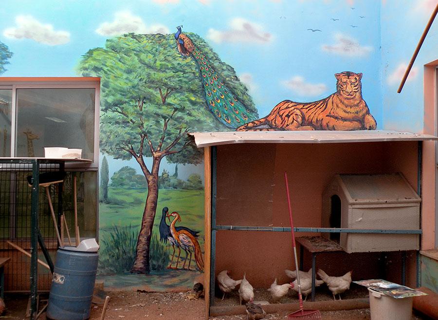 ציורי קיר לפינת חי של ציפורים, טווס ונמר לבית ספר